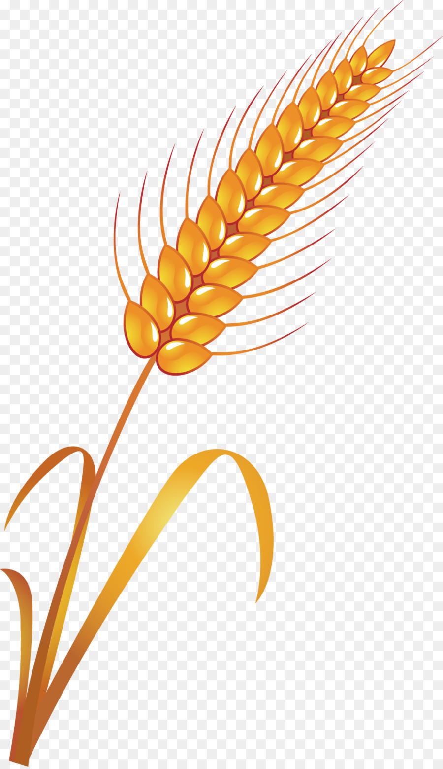 Пшеница картинки для детей, для