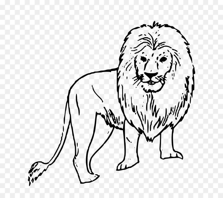 Aslan Boyama Kitabi Gir Orman Milli Parki Sayfa Cougar Aslan