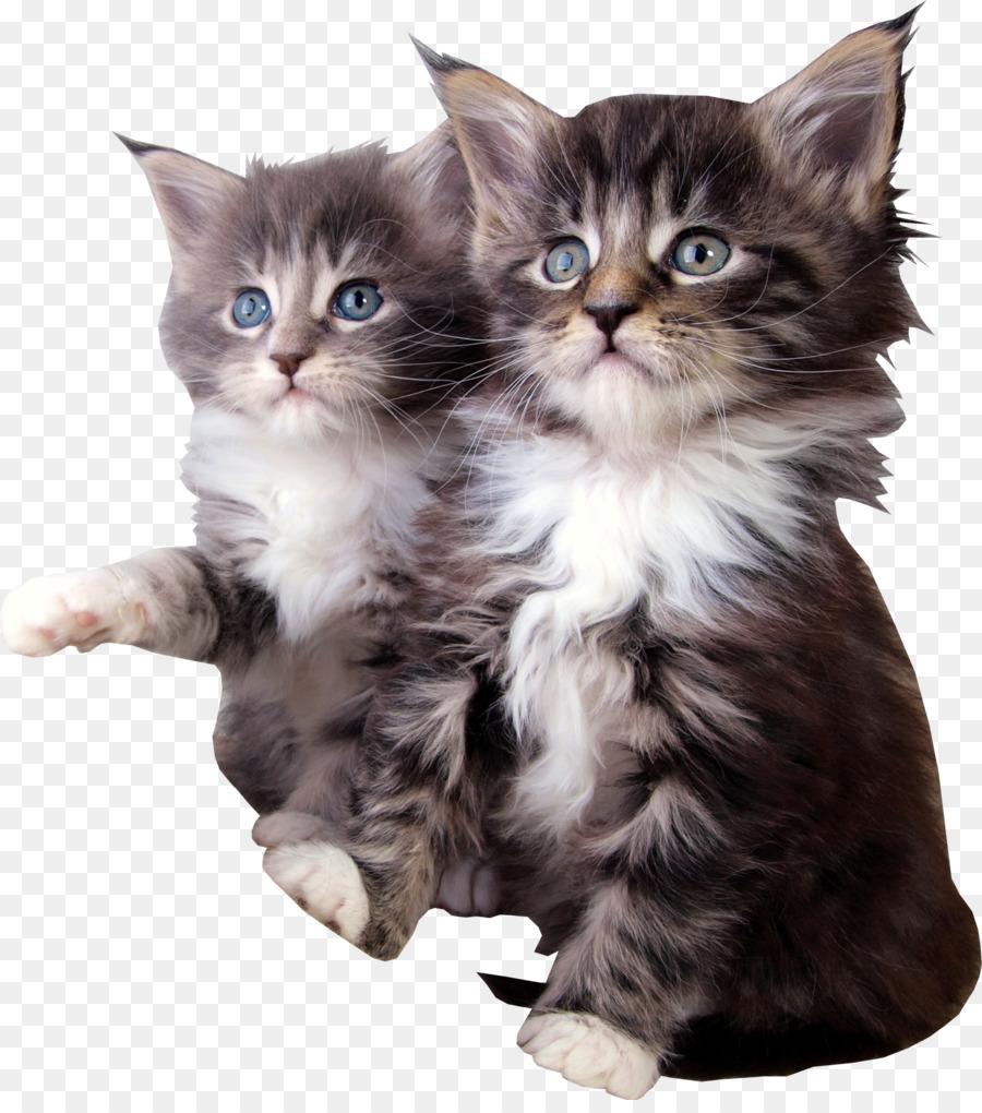Самые красивые картинки с животными с кошками