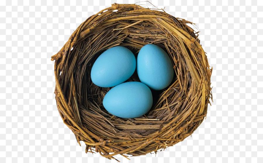 Images of Bird Egg Osrs - #rock-cafe