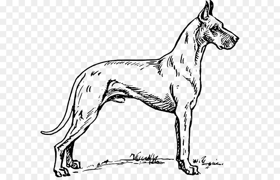 Danua Dalmaçyalı Köpek Boyama Kitabı Pit Bull Greyhound