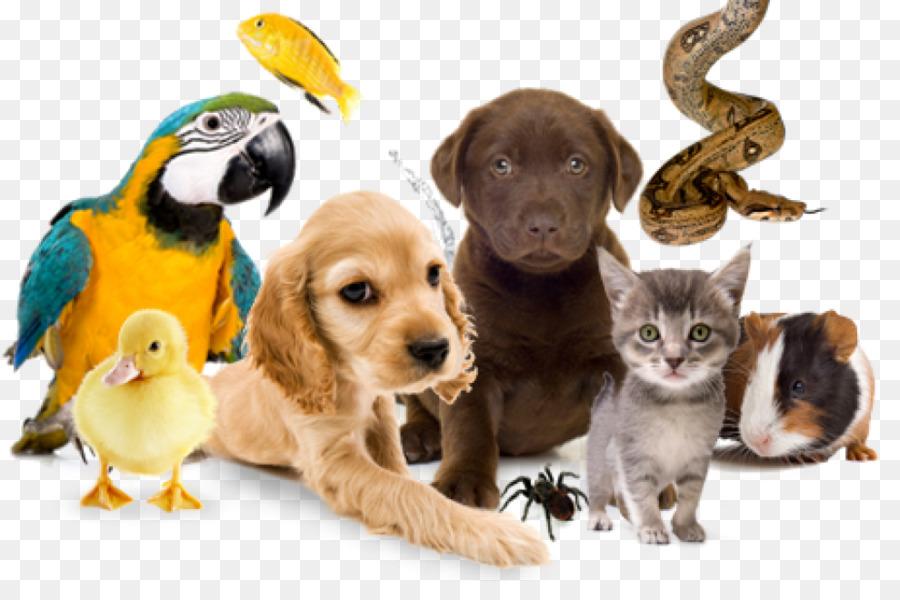 Картинки зоомагазина с животными