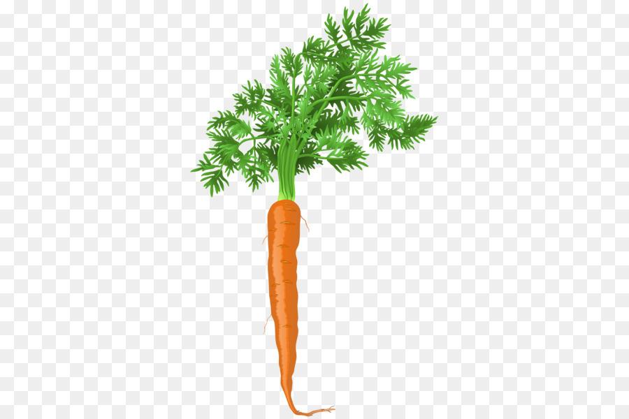 Человечками, картинки моркови на прозрачном фоне