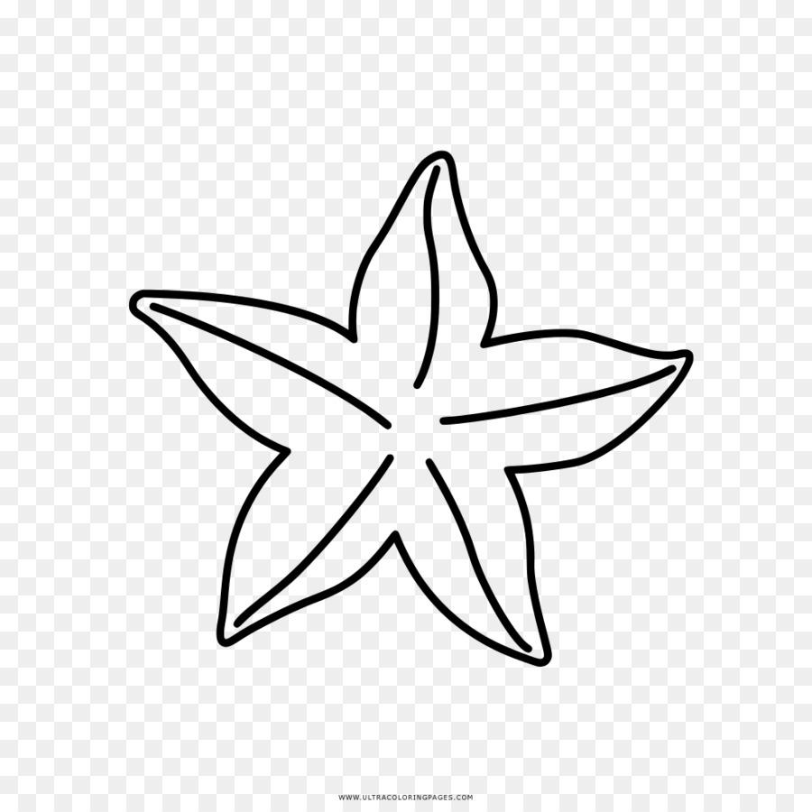 Boyama Kitabı Denizyıldızı Küçük Resim çizimi Denizyıldızı