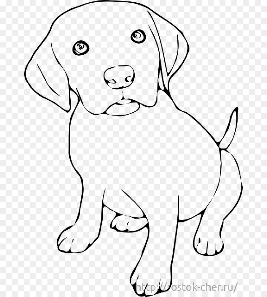Labrador Retriever Yavrusu Golden Retriever Yavru Kedi Boyama