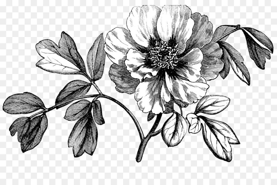 Роза букете, цветы графика пнг чб
