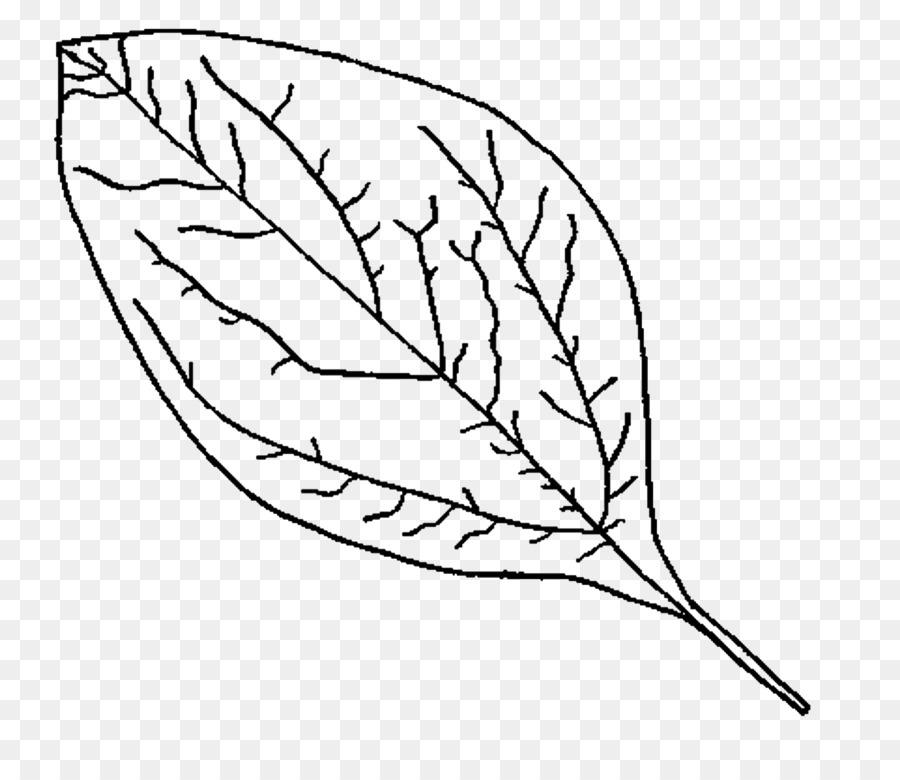Boyama Kitabı Büyülü Orman Sonbahar Yaprak Sonbahar
