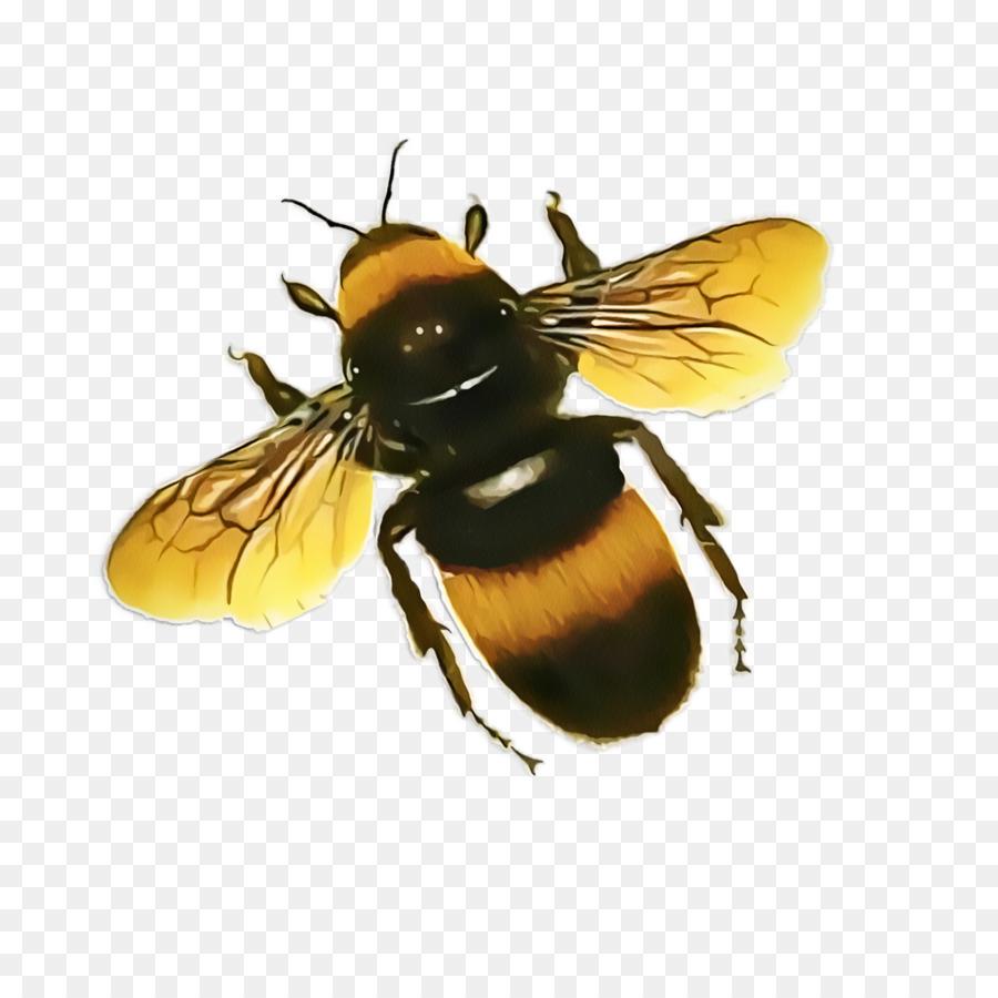 практике пчела в пнг на прозрачном фоне которую планируется заправлять